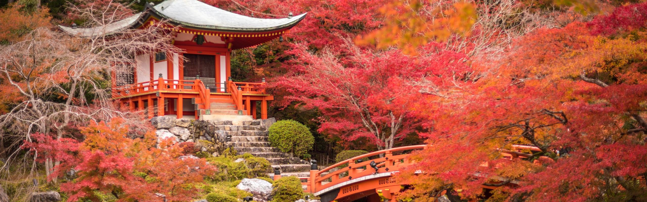 5-Day Tokyo Highlights Tour