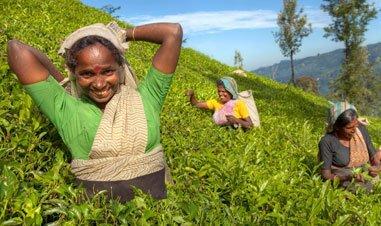 Ladies in Nuwara Eliya Sri Lanka