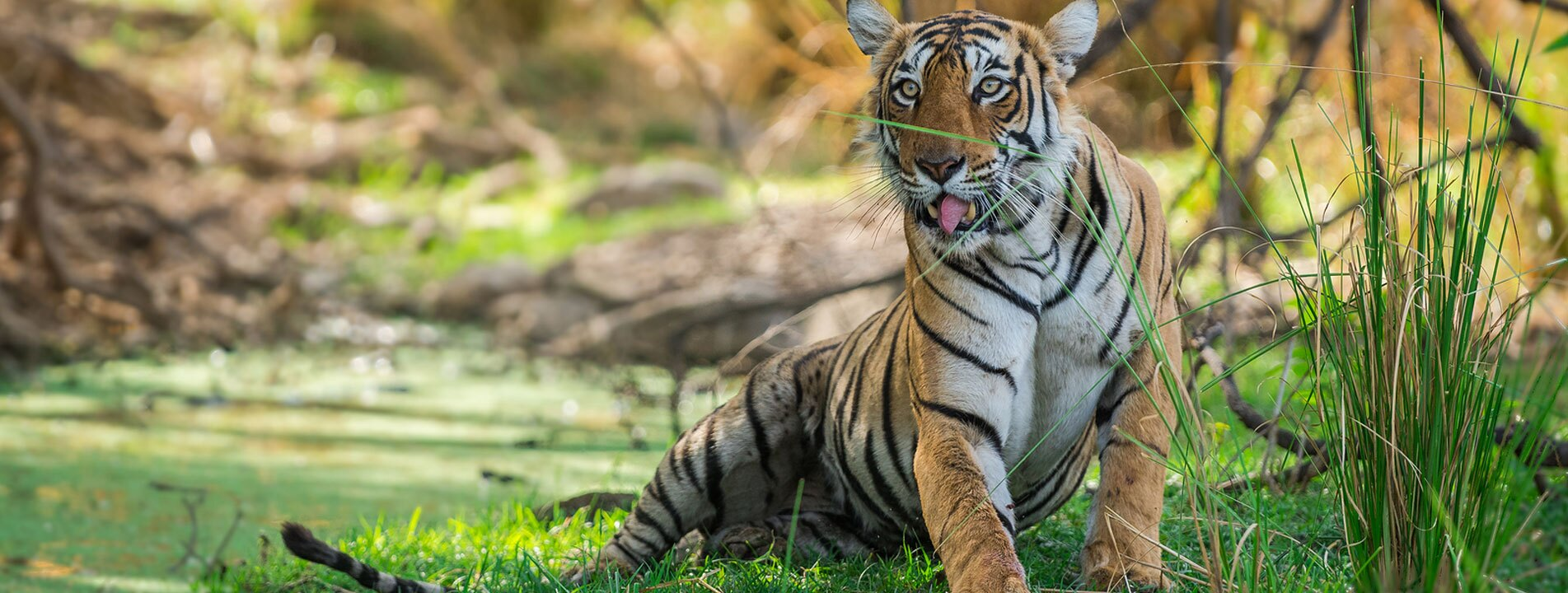 9-Day India Golden Triangle with Tiger Safari
