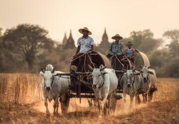 Bagan Horse Ride