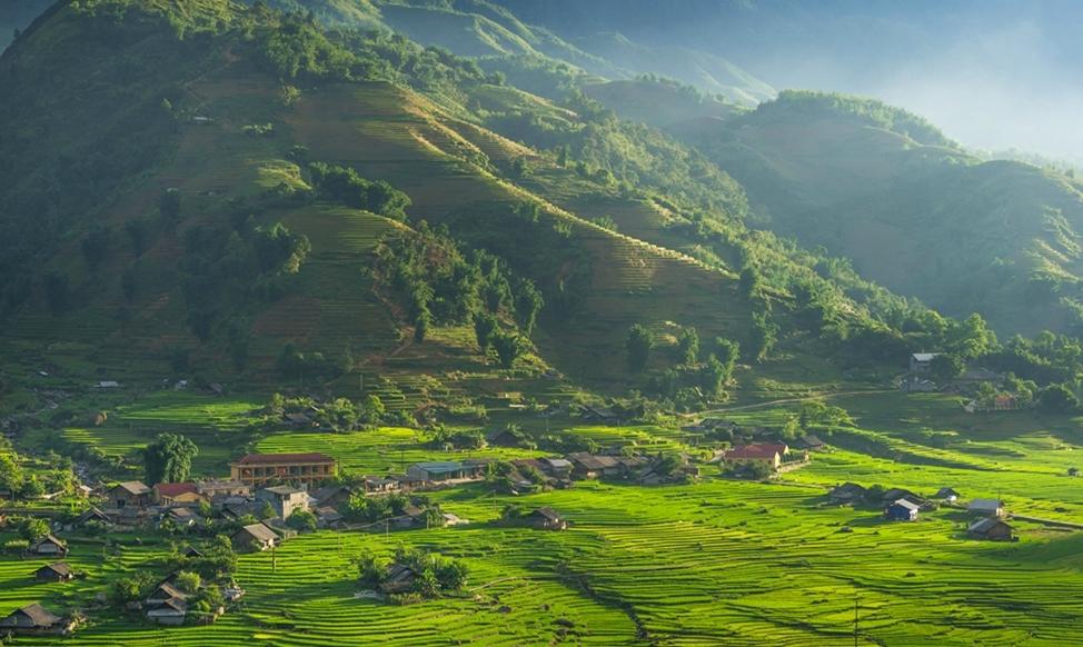 vietnam's rice fields in summer